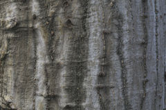 The tree texture Royalty Free Stock Image