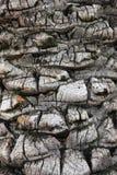 Tree texture Royalty Free Stock Photos