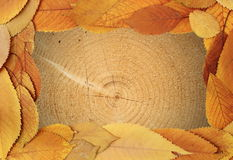 Tree texture with golden leaves frame Royalty Free Stock Photos