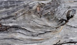 Tree Texture: Nature's Tendency Royalty Free Stock Photography