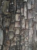 Tree texture. Nature wood background wallpaper. Tree texture. Nature wood background Royalty Free Stock Photos