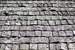 Tree texture Royalty Free Stock Photo