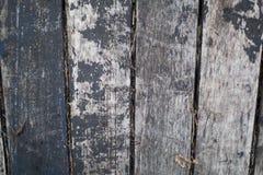 Tree texture Stock Image