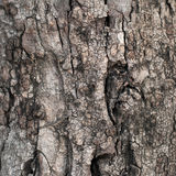 Tree texture. Old tropical tree bark shot clostup for make texture stock images