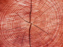 Tree. Texture of red cut tree Stock Photos
