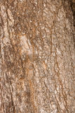 Tree Texture. Texture shot of brown tree bark, filling the frame Stock Images