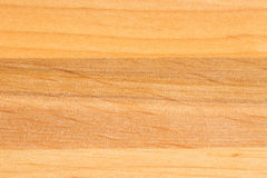 Tree texture. Timber light natural pattern. Wood grain background Stock Photography