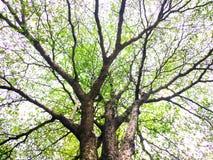 tree from thaland royalty free stock photos