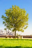 Tree. There is tree in the park Royalty Free Stock Photography