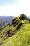 Tree on thetop of hill. Top of Little Adam's Peak, Sri Lanka Royalty Free Stock Images