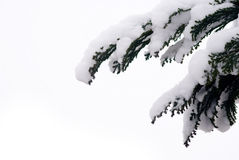 Tree with thick snow layer Stock Photos