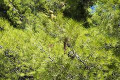 Tree with thorny branches closeup. Stock Photography