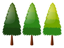 Tree in three colors. Illustration Royalty Free Stock Image