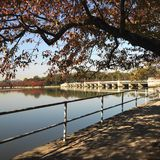 Tree by tidal basin Stock Photography