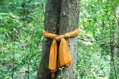 The tree tied to religious belief. Stock Photo