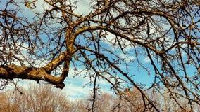 Tree timelapse stock footage