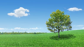 Tree on to the meadow. Lonely tree in a meadow Stock Photo