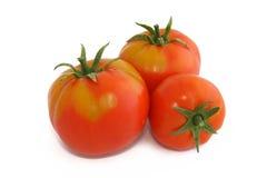 Tree tomatoes Stock Photo