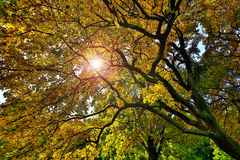 Tree top in autumn with sunbeam Stock Photo