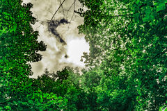 Tree Top from Below. A shot from the floor looking up through a break in the trees Royalty Free Stock Image