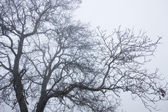 Tree Top Branches. Winter mood tree top branches Royalty Free Stock Photography