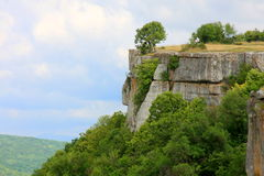 Tree on top of a cliff Stock Images