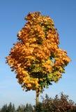 Tree top Stock Photos