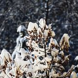 Tree top illuminated by the sun. Tree top covered with snow and illuminated by the sun Royalty Free Stock Images