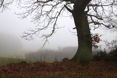 Tree on top of the field in the gray fog Stock Image