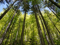 Tree top in forest Stock Photos