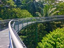 Tree top walk Southern Ridges trail in Singapore Royalty Free Stock Images