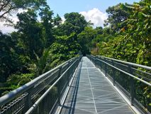 Tree top walk Southern Ridges trail in Singapore Stock Photo