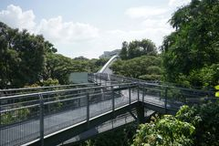 Tree top forest walk ,Southern Ridges trail in Singapore Stock Photography