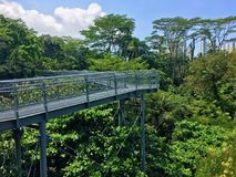 Tree top walk Southern Ridges trail in Singapore Royalty Free Stock Photos