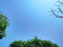 Tree Top with Green Leaves and Branches Against Blue Sky. Low Angle View of Tree Top with Green Leaves and Branches Against Blue Sky royalty free stock photo
