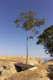 A tree on top of the hill. A lone tree at the cliff of the hill in the national park Stock Images