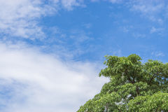 Tree top line over blue sky and clouds background in summer. Green tree top line over blue sky and clouds background in summer Royalty Free Stock Photo