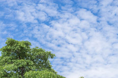 Tree top line over blue sky and clouds background in summer. Green tree top line over blue sky and clouds background in summer Royalty Free Stock Image