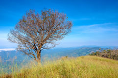 A tree on the top of Mon Thule mountain, Thailand Royalty Free Stock Photos