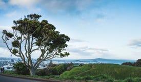 Tree on Top of Mount Eden stock photo
