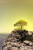 Tree on top of the mountain Stock Photos