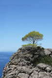 Tree on top of the mountain Royalty Free Stock Images
