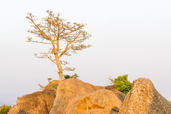 Tree on top mountain Stock Photography