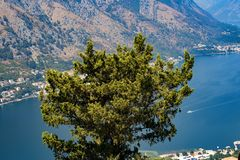Tree on top of a mountain. Overlooking the Bay Royalty Free Stock Photography