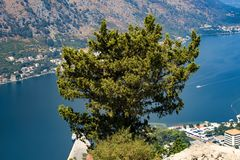 Tree on top of a mountain. Overlooking the Bay Royalty Free Stock Photos