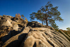 Tree on a top mountain under blue sky in sunny day Royalty Free Stock Image