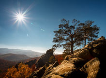 Tree on a top mountain under blue sky in sunny day Royalty Free Stock Photo