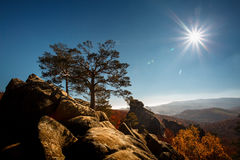 Tree on a top mountain under blue sky in sunny day Royalty Free Stock Photos