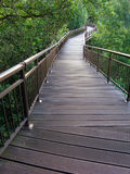 Tree top nature walk. A very unusual wild life trail among nature walks - a wooden boardwalk path way built to take the walker on a meandering walking trail Royalty Free Stock Photos