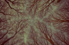 Tree top. Photo isy taken in the afternoon in one national park in Serbia Royalty Free Stock Photo